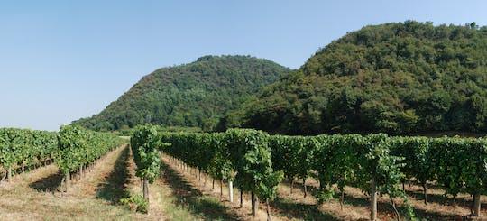 Tour del vino della Franciacorta e degustazione da Brescia