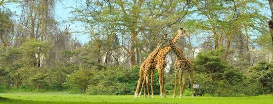 From Nairobi: Rift Valley  4-day safari