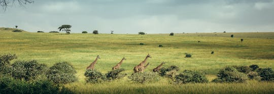 Nairobi National Park full-day tour