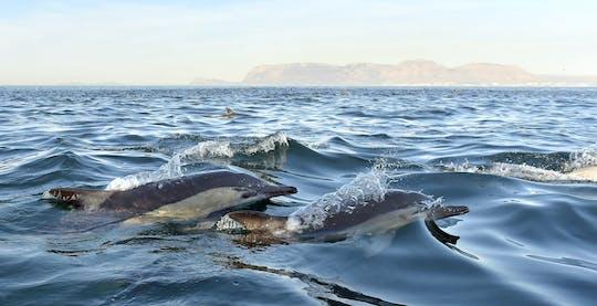Observação de golfinhos e passeio pela Arrábida