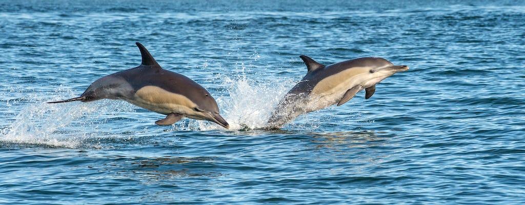 Excursion d'une demi-journée avec observation des dauphins