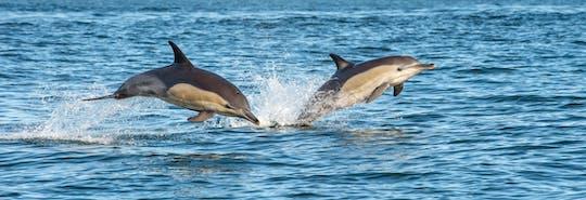 Excursão de meio dia para observação de golfinhos