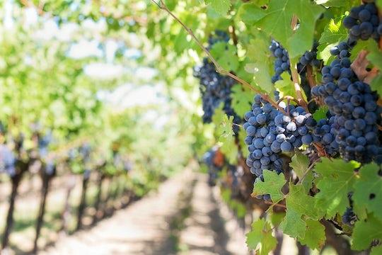 Sicilian wine private tour from Palermo