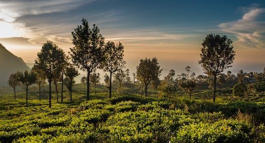 Tour di James Tayler's Seat e Loolkadura Tea Estate da Kandy