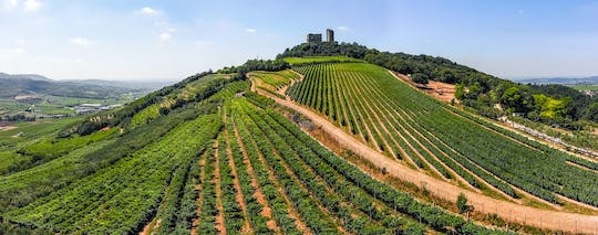Private Soave wine tour and tasting from Verona