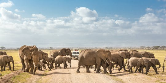 Amboseli de avião de 3 dias com estadia em Ol Tukai Lodge