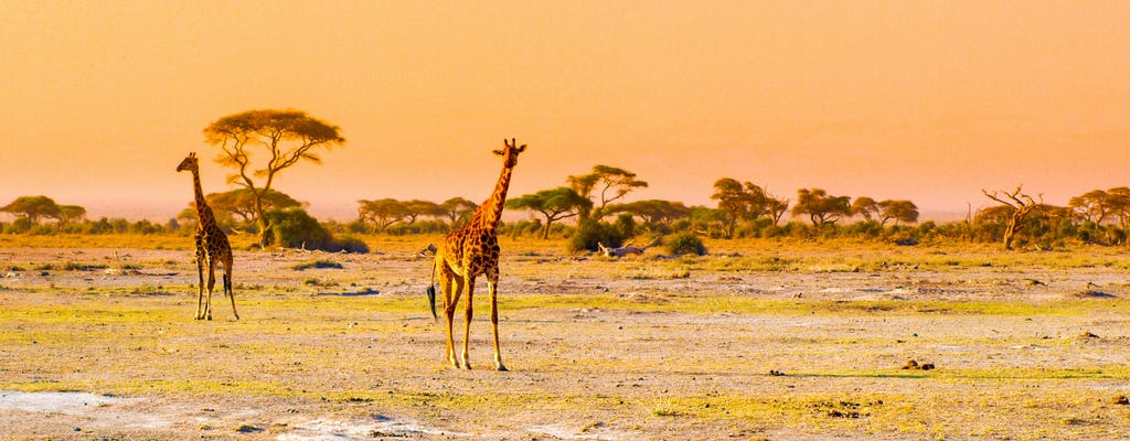 3-day Amboseli by plane with Tortilis Camp stay