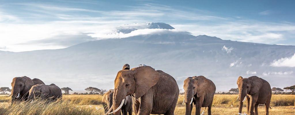 3 Tage Amboseli mit dem Flugzeug mit Serena Lodge Aufenthalt