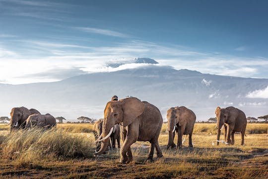 3-day Amboseli by plane with Serena Lodge stay