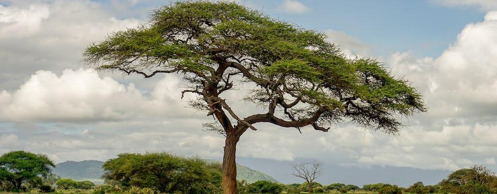 Pacote de 3 dias Amboseli Tsavo West de trem de Nairóbi