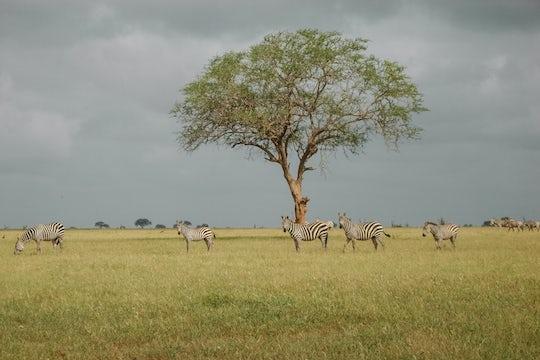 3-day Amboseli Tsavo West package by train from Mombasa