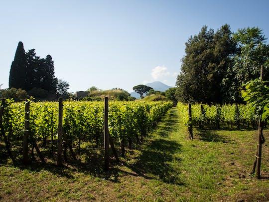 Tour privato del vino e degustazione da Pompei
