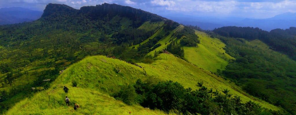 Randonnée dans la montagne Hanthana le long du sentier de la forêt Sherwood au départ de Kandy
