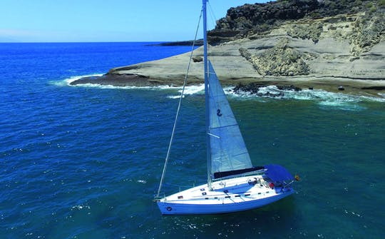 Whale and dolphin watching on an exclusive sailboat in Tenerife