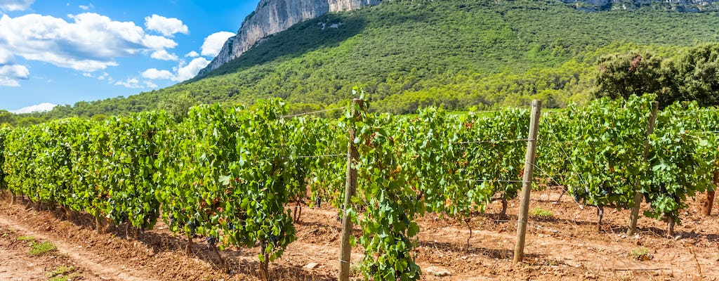 Pic Saint-Loup wine and olive oil tour for small groups