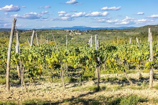 Experiencia de cata de vinos premium de medio día de Rovinj