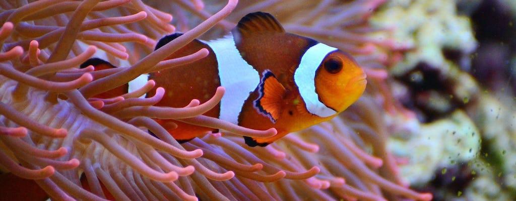 Kapstadt Zwei Ozeane Aquarium mit One-Way-Transfer
