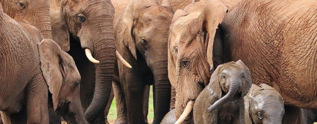 Addo Elephant Park-tour