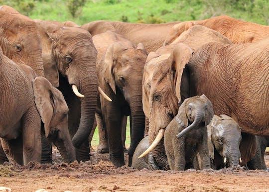 Тур в Аддо Парк слонов