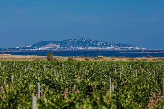 Weinprobe in kleinen Gruppen ab Sète