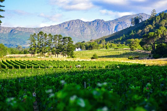 Half-day private tour to Groot Constantia