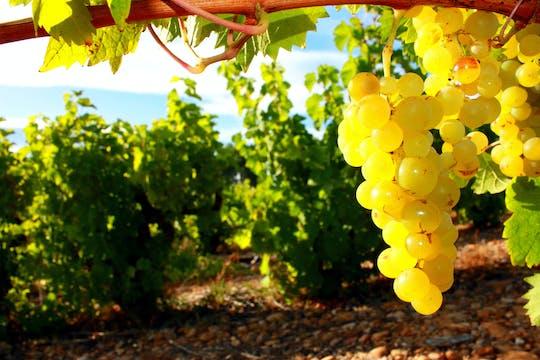 Visite dégustation de vins en petit groupe au départ de Sète avec déjeuner