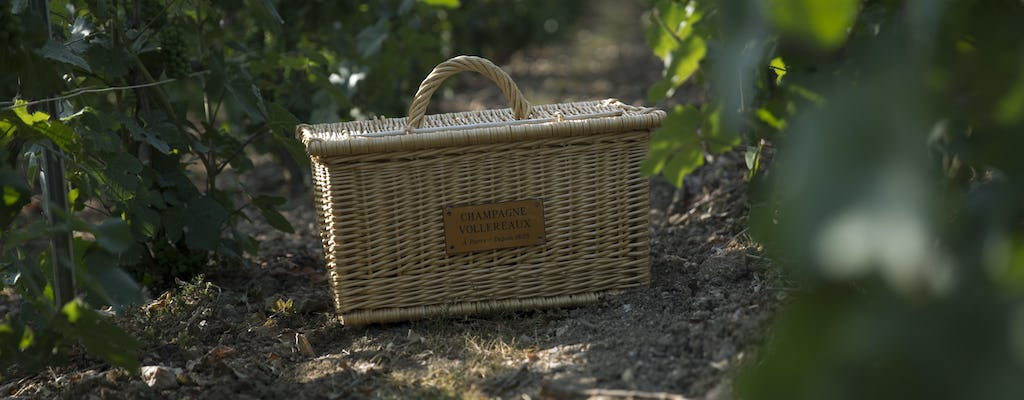 Guided tour of  Vollereaux Champagne cellar with a picnic in the vineyard