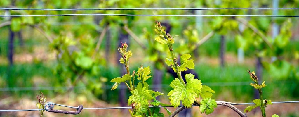 Private halbtägige Tour zum Weingut Spier