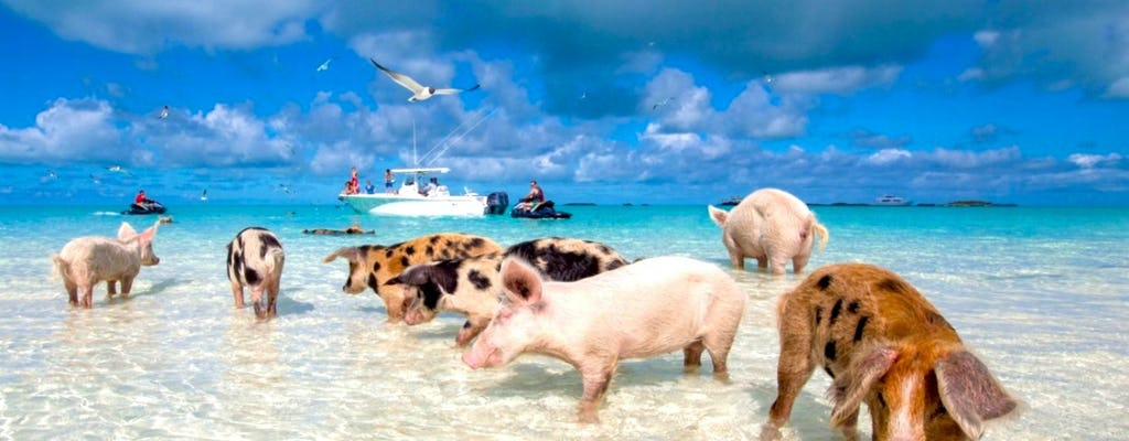 Grand Bahama tour with optional Pig Beach visit