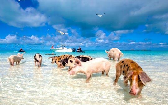 Excursión a Gran Bahama con visita opcional a Pig Beach