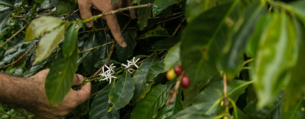Urbania Coffee Farm experience