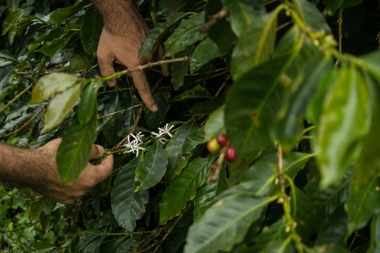 Experiencia Urbania Coffee Farm