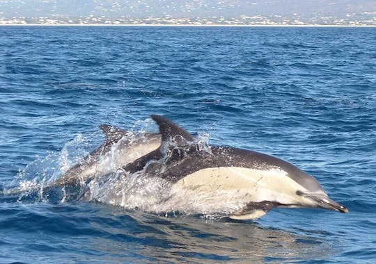 Dolphin Watching Cruise Ticket
