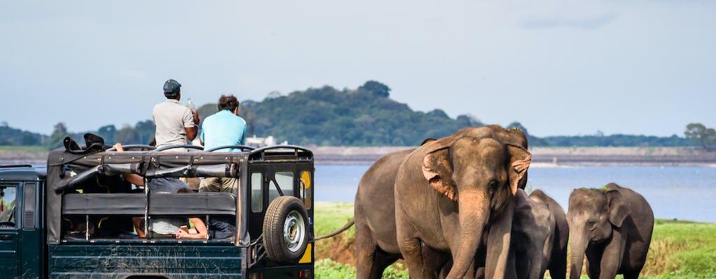 Safári de dia inteiro no Parque Nacional de Yala saindo de Colombo