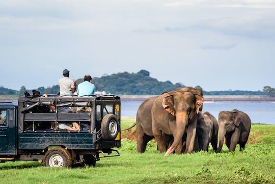 Yala National Park full-day safari from Colombo