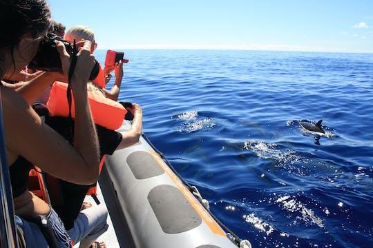 Dolphin & Whale Watching Speedboat Tour Ticket