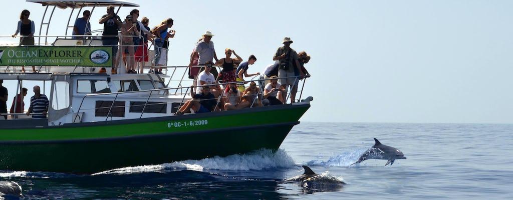 Flipper Whale Watching Boat Trip Ticket