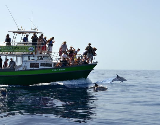 Flipper Whale Watching Afternoon Boat Trip Ticket