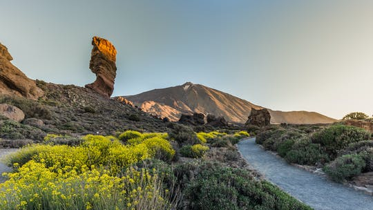 Half-day Teide national park tour