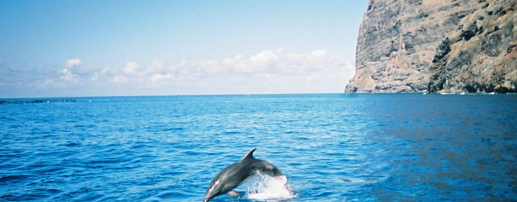 Luxury whale and dolphin watching experience