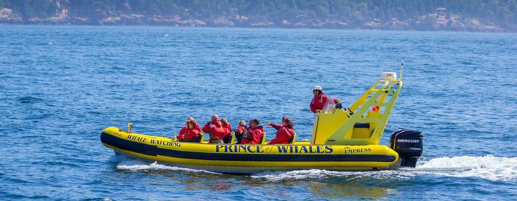 Zwiedzanie wielorybów zodiaku w Telegraph Cove