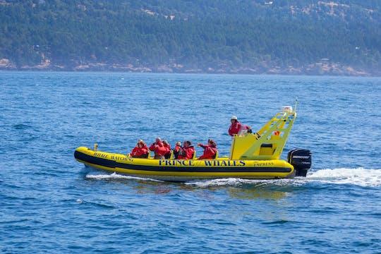 Excursão de observação de baleias do zodíaco em Telegraph Cove