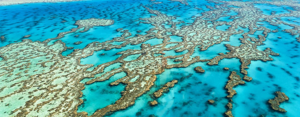 Full-day snorkel experience at the Great Barrier Reef