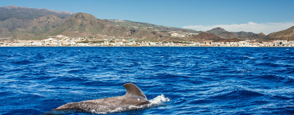 Catamaran whale watching excursion in Costa Adeje