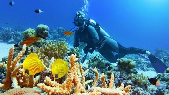 Experiencia de buceo de día completo en la Gran Barrera de Coral con guía PADI