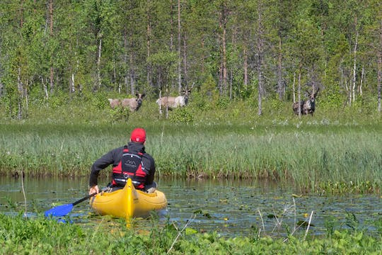 Visit an authentic reindeer farm with a canoe trip
