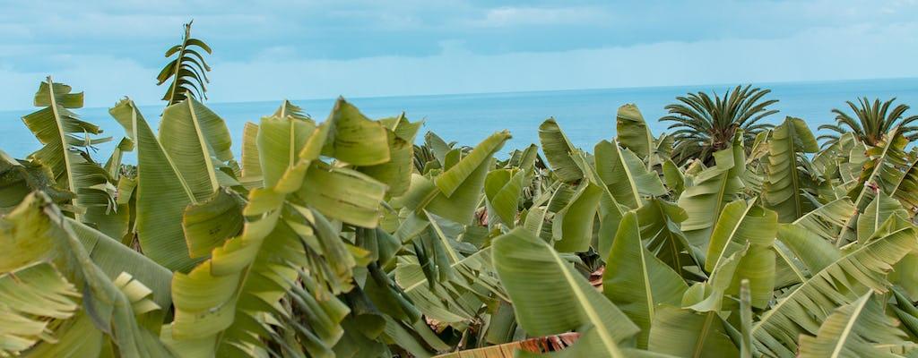 Tour privado em uma plantação de banana ecológica