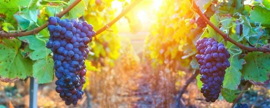 Coteaux d'Aix and Sainte-Victoire half-day private wine tour
