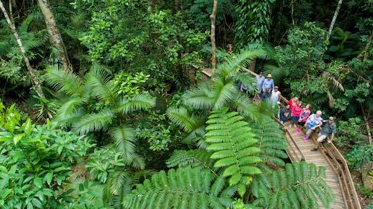 Daintree Rainforest, Cape Tribulation e Bloomfield Track Tour em pequenos grupos