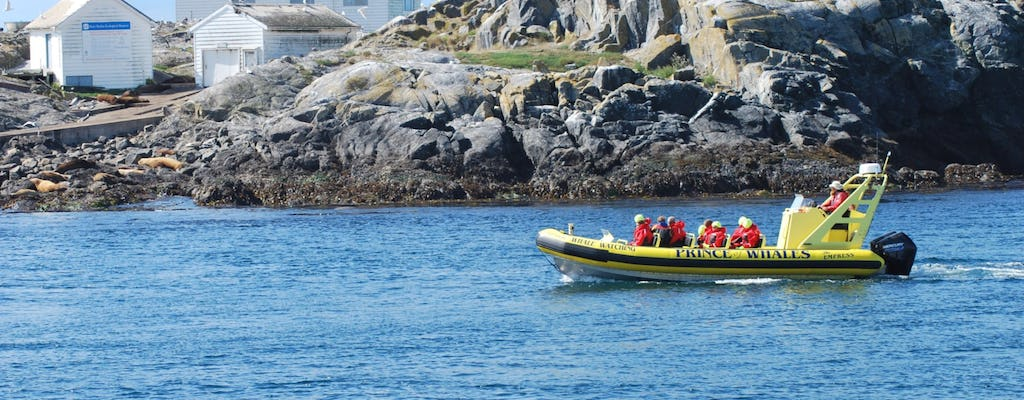 Zodiac whale watching tour in Victoria